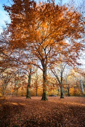 Moments of light in the colourful autumn forest. colourful foliage. deep light. falling leaves. winding paths. perfect outdoor weather. light and shadow in the forest. yellow, green and orange trees.