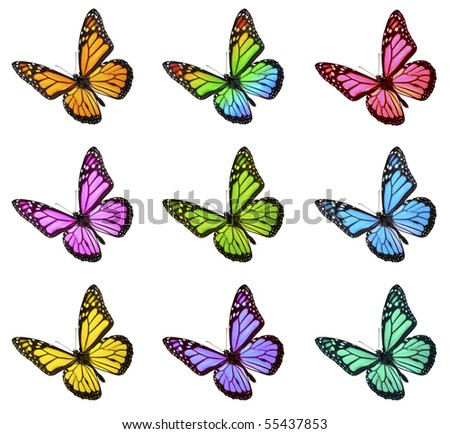 Monarch Butterfly in Various Colors