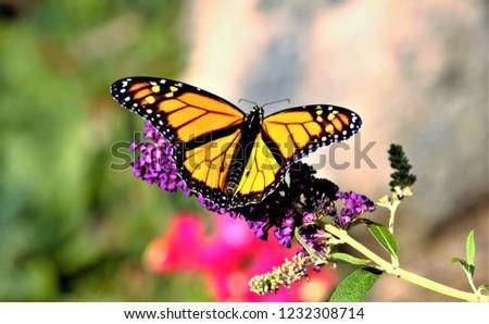 Monarch butterfly on flower #1232308714