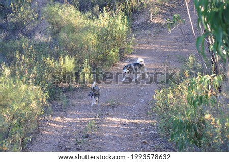 MONCHIQUE, FARO, PORTUGAL- JULHO 8, 2018: Dogs walking in nature near the forests and bushes