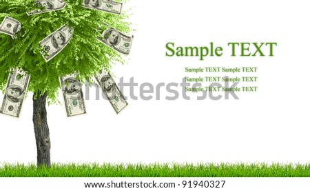 Money dollars tree growing on green grass isolated on white with space for text