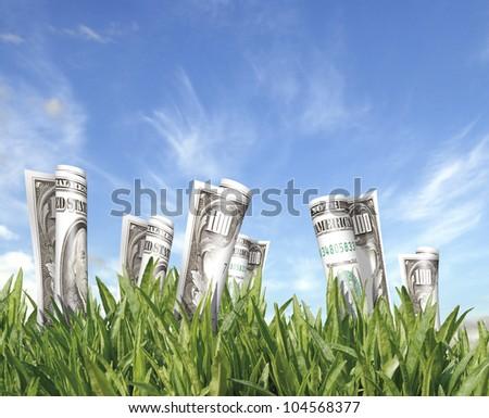 Money field 3