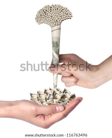money flower business concept present isolated on a white background