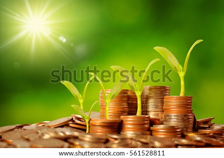 Money growing concept,Business success concept,Trees growing on pile of coins money over green background and sunlight