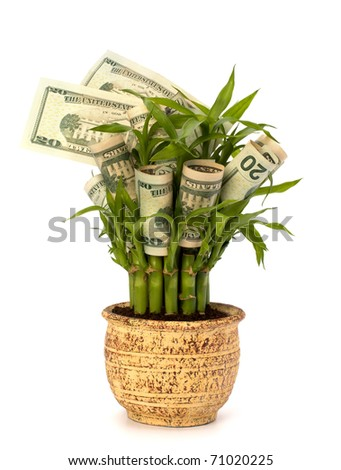 Money growing concept. Money banknotes growing  in flowerpot isolated on white background.