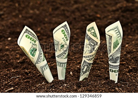 Money growing. Dollars bill growing in soil.