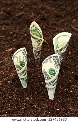 Money growing. Dollars bill growing in soil.