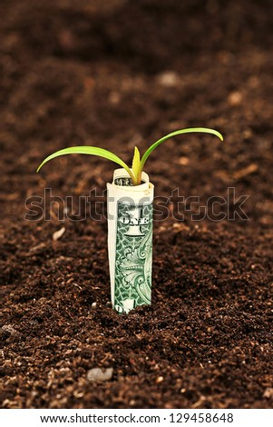 Money growing. One dollar bill in soil.