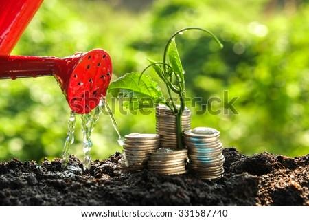 money growth concept plant...