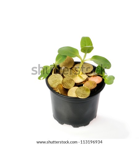 Money growth concept with coins and young plant