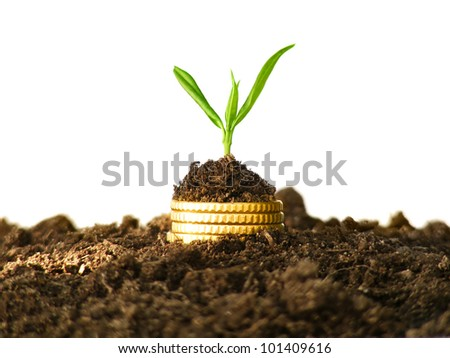 Money growth. Gold coins in soil with young plant. Financial metaphor.