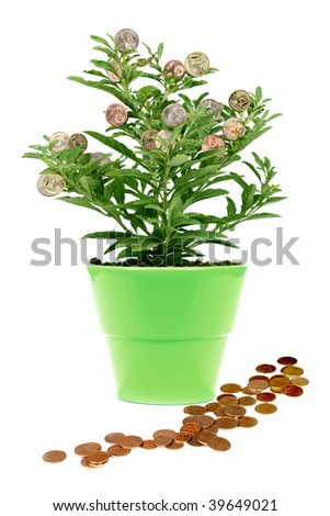 money tree - green plant with golden coin, in a green pot