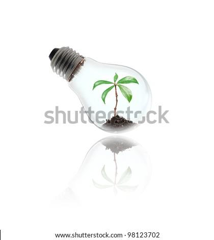 money tree in a light bulb