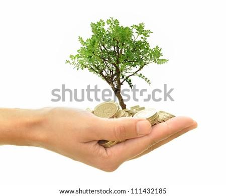 Money tree in hand