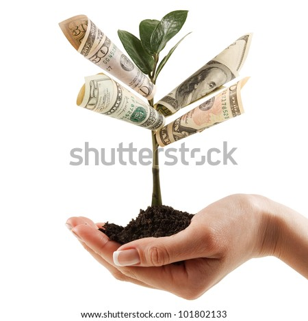 Money Tree on his hand of women. a symbol of financial success. - stock photo