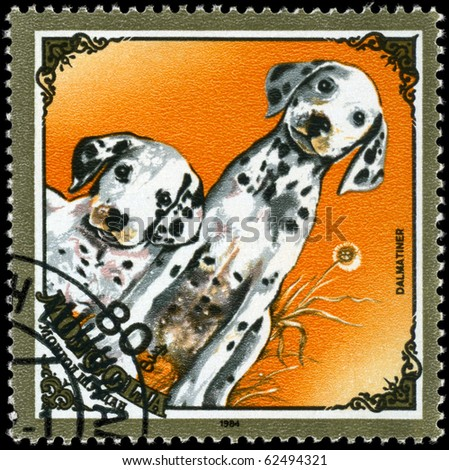 "MONGOLIA - CIRCA 1984: A Stamp printed in MONGOLIA shows image of a Dalmatians from the series ""Dogs"", circa 1984"