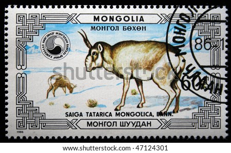 MONGOLIA - CIRCA 1986: A stamp printed in Mongolia shows Saiga Antelope - Saiga tatarica mongolica, circa 1986 - stock photo