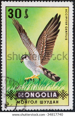 MONGOLIA - CIRKA 1974: Postal stamp Mongolia, 1974.  The Goshawk, Accipiter gentilis, is a medium-large bird of prey in the family Accipitridae