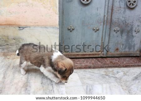Mongrel Puppy in Varanasi #1099944650