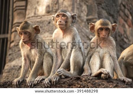 Monkey  #391488298