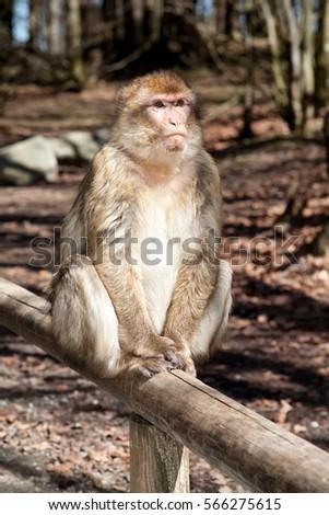 Monkey #566275615