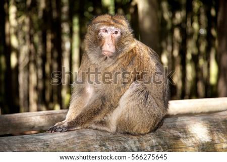 Monkey #566275645