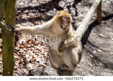 Monkey #566276371