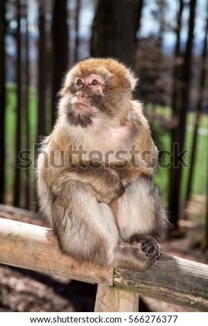 Monkey #566276377