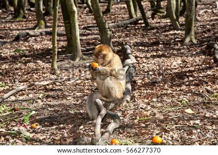 Monkey #566277370