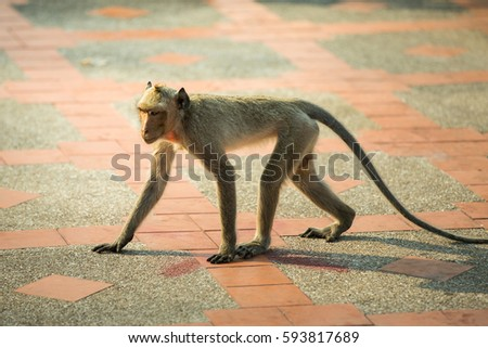 Monkey #593817689
