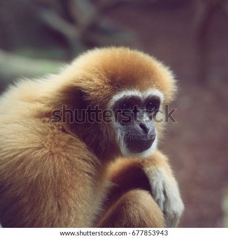 Monkey #677853943