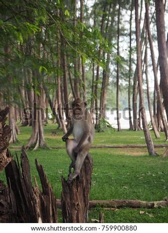 monkey  #759900880