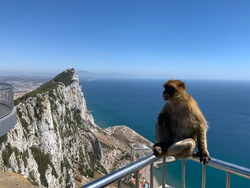 Monkey at the top of the rock of Gibraltar, photo looking towards the north face. August 29th 2020