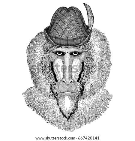 monkey  baboon  dog ape  ape...