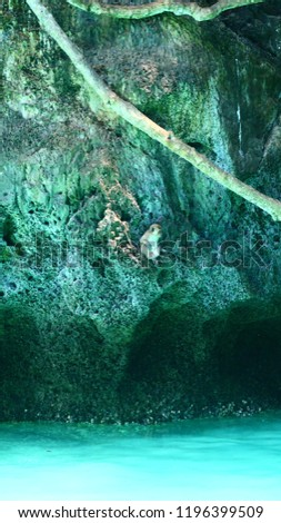 Monkey bay. green forest with ocean  background. Tropical jungles in Asia