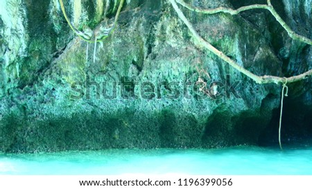Monkey bay,Thailand. green forest with ocean  background. Tropical jungles in Asia.
