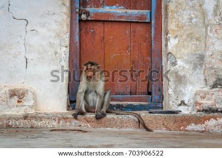 Monkey by the door