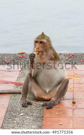 Monkey disabilities have one arm Zdjęcia stock ©