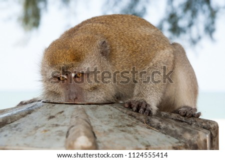 Monkey eat from plate. Primate sit outdoor. Cute animal. Monkey day. Wild nature and wildlife. Zoo.