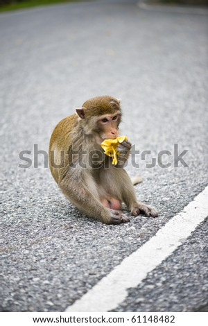 pics of monkeys eating bananas. stock photo : monkey eating