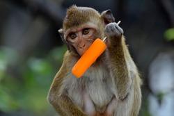 Monkey eating ice cream,monkey like and love ice cream.