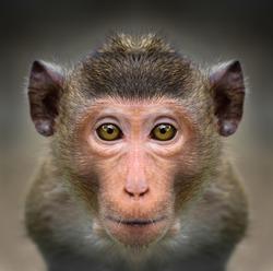 Monkey face close up