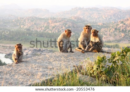 Monkey family gathered on a rock near temple, hampi, india