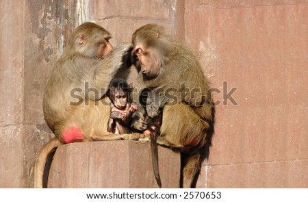 Monkey family is sitting in the sun.
