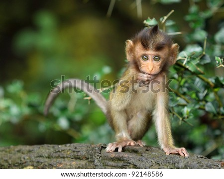 monkey forest child naughtily