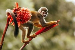 monkey in a flower