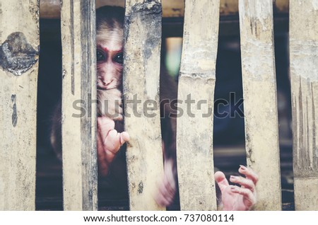 monkey in cage  vintage filter...