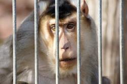 Monkey in captivity in an animal park