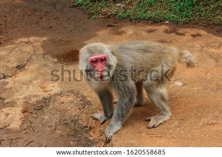 Monkey in the Hainan Tropical Wildlife Park