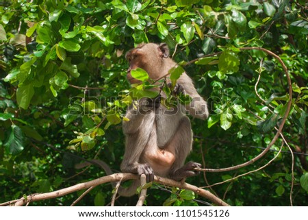 Monkey in the lush forest #1101545126